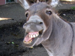A donkey. (thesaltfactory.org)